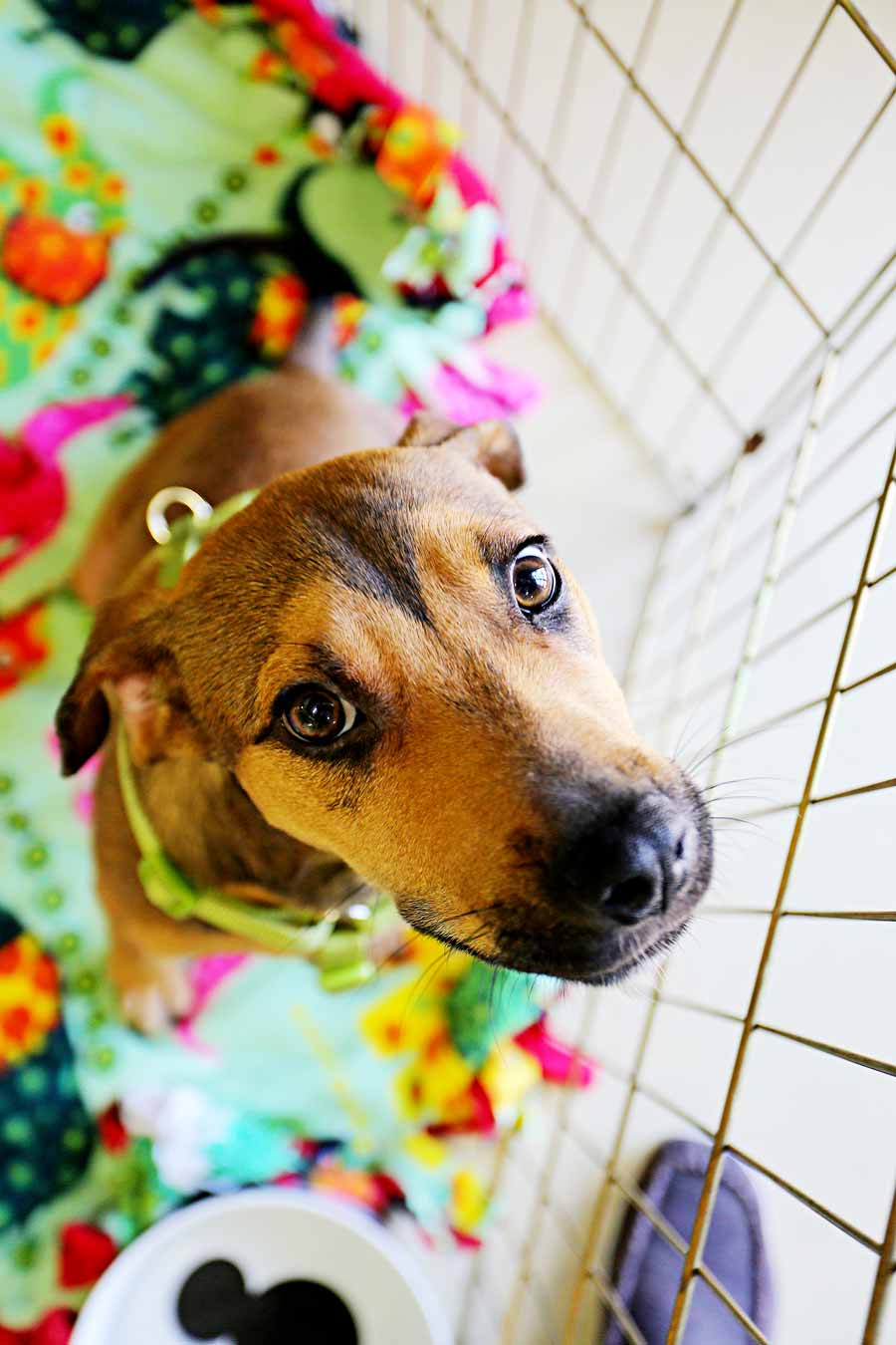 """April 2014: Who could say """"no"""" to Katherine's imploring eyes? Not us. And not our readers. Donations to the no-kill South Lake Animal League climbed after our feature story on fur babies needing adoption."""