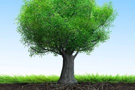 Finding the Roots of the Family Tree