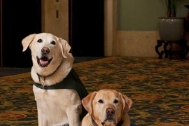 OUT+ABOUT: Canine ambassadors