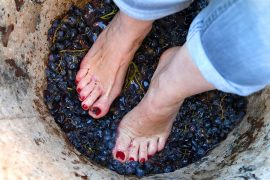 23rd annual Grape Stomp