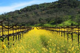 Napa Valley: Open for business