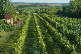Hungary's winemaking renaissance