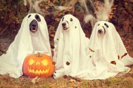 It's Time for Some Halloween Fun! Lots of Events!