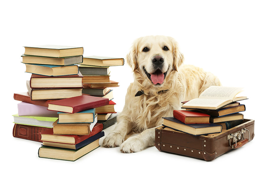 good-dog-sitting-among-books