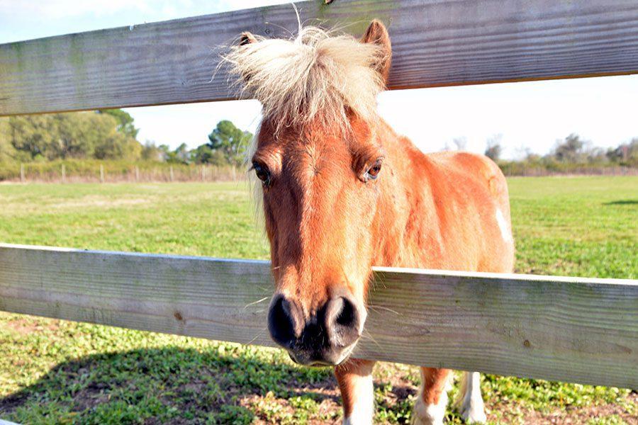 Stanley-Pond-horse