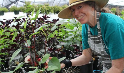 Spring has sprung: It's time for annual Master Gardener Plant Sale
