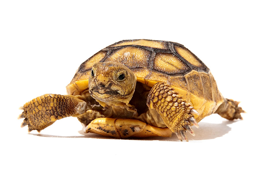 turtle-on-white-background