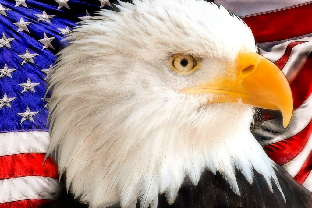 bald-eagle-and-American-flag